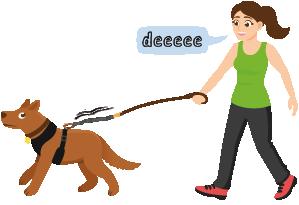 Votre chien tire en laisse Une fille avec un chien après un entraînement à la traction sans laisse